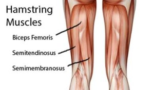 Hamstring-Muscles1